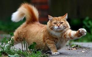 2577499-cat
