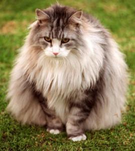 cat-271