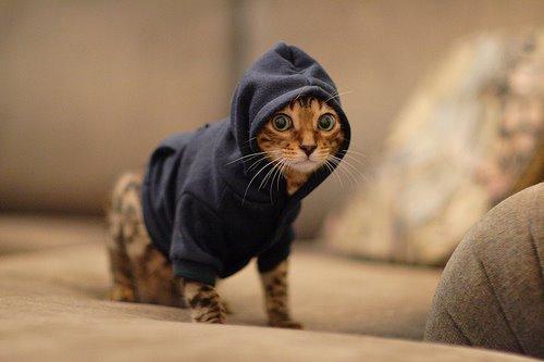 Kediler Hakkında Bilinmesi Gereken 20 Gerçek!