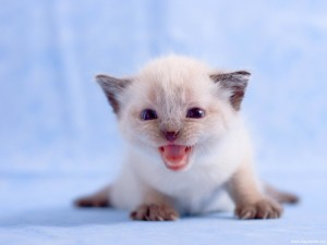 yeni-dogmus-kedi